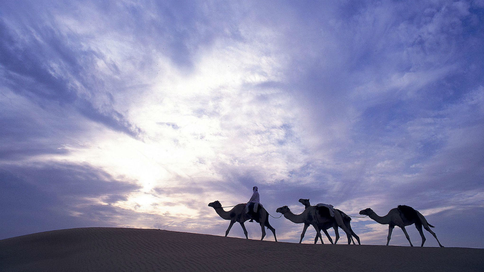 Camel Trekking, Al Maha Desert Resort and Spa